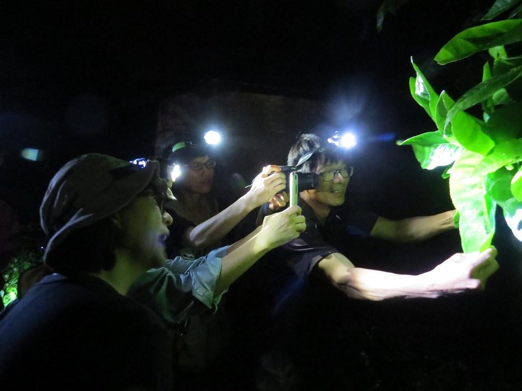 花蓮光復的水龍吟志工隊,四月份例行蛙調現場,志工們正在辨識蛙種。攝影:張國政