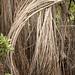 Mangrove bower