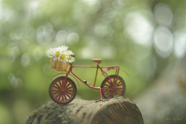 A Bokeh Bike Ride...