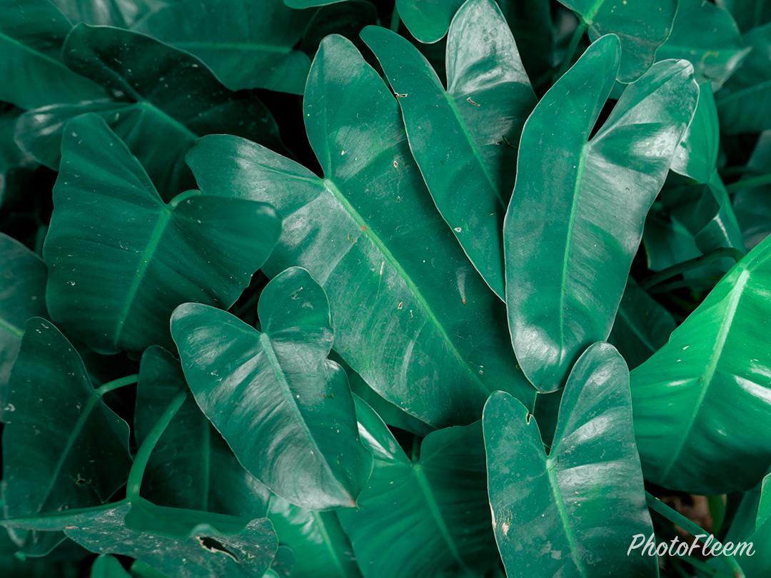 ภาพถ่ายธรรมชาติโทนสีเขียวมรกต แต่งด้วย Lightroom