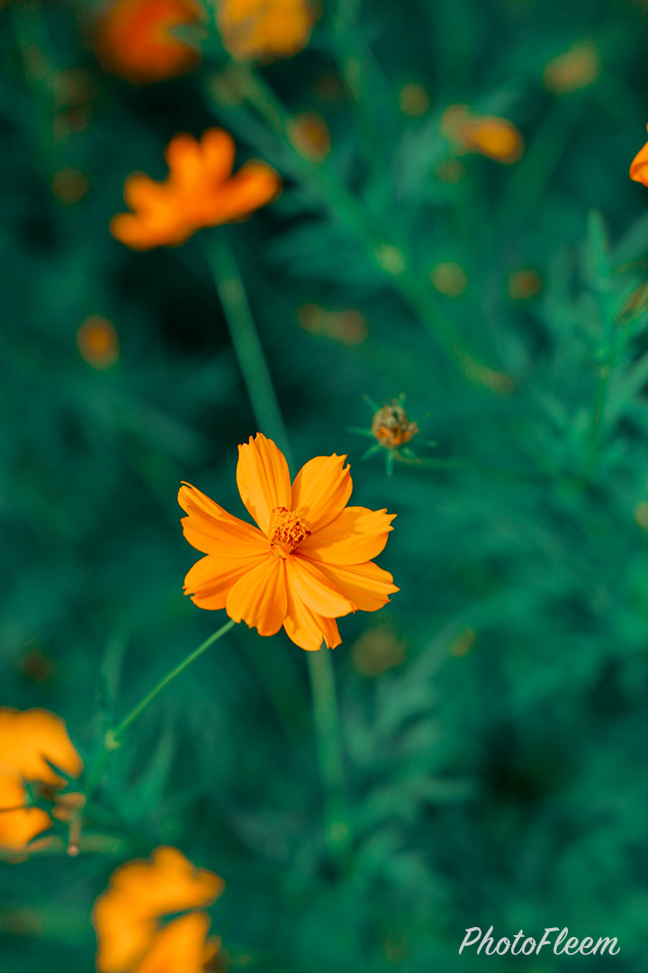 ภาพถ่ายดอกไม้ โทนสีเขียวมรกต แต่งด้วย Lightroom