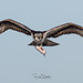 Osprey of the Jersey Shore | 2019 - 15