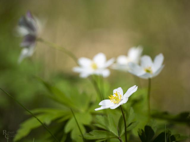 Nordmarka Flowerbokeh