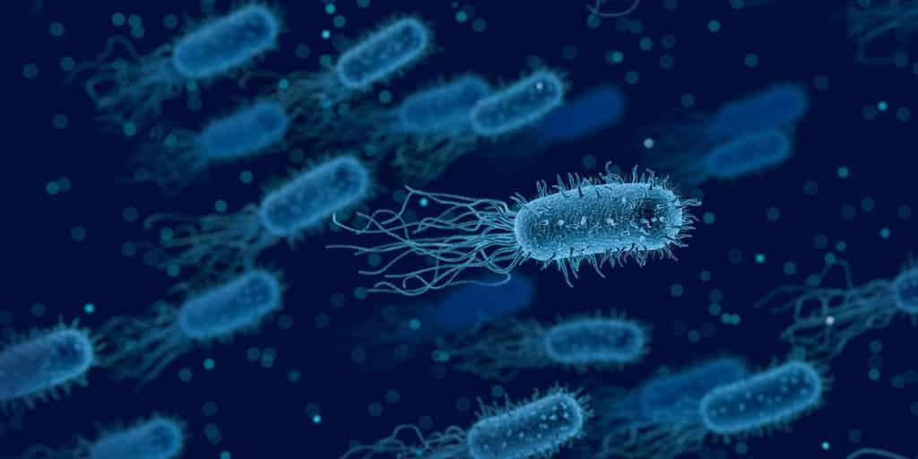 Une bonne bactérie peut déclencher une maladie auto-immune