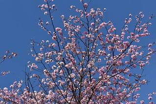 2019-03-24: Blossom