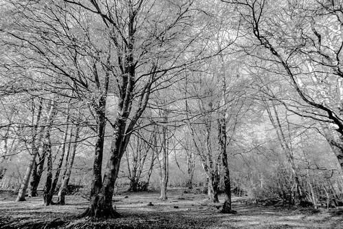 IR trees b/w