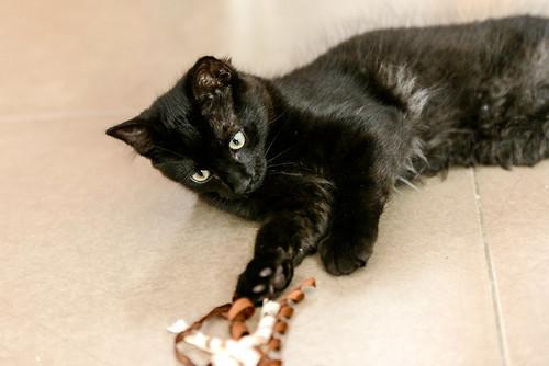 Yoel, gatito monisimo pelo semilargo negro esterilizado, nacido en Febrero´19, en adopción. Valencia. 48088347793_32250a8654