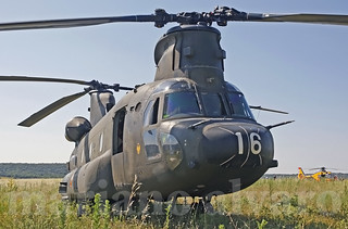 Chinook on the grass