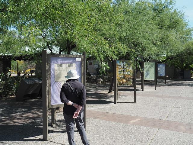 S5024575 Tucson AZ Sabino Canyon Recreational Area