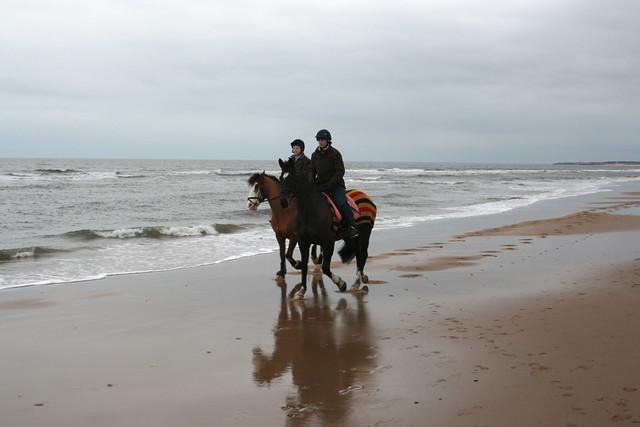 Horses on Druridge Bay