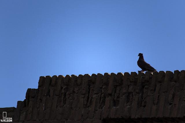 کاروانسرای ساسانی دیرگچین استان قم- پارک ملی کویر- پرندگان