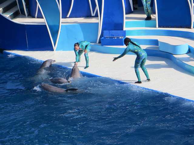 Delphins with Trainers During Show at Sea Word in San Diego
