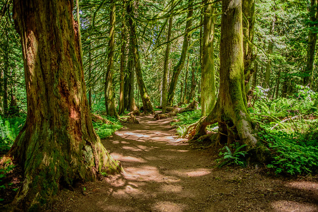 More Teapot Hill Trail