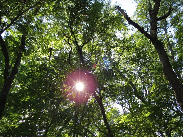 Sunshine Through Tree Branches.