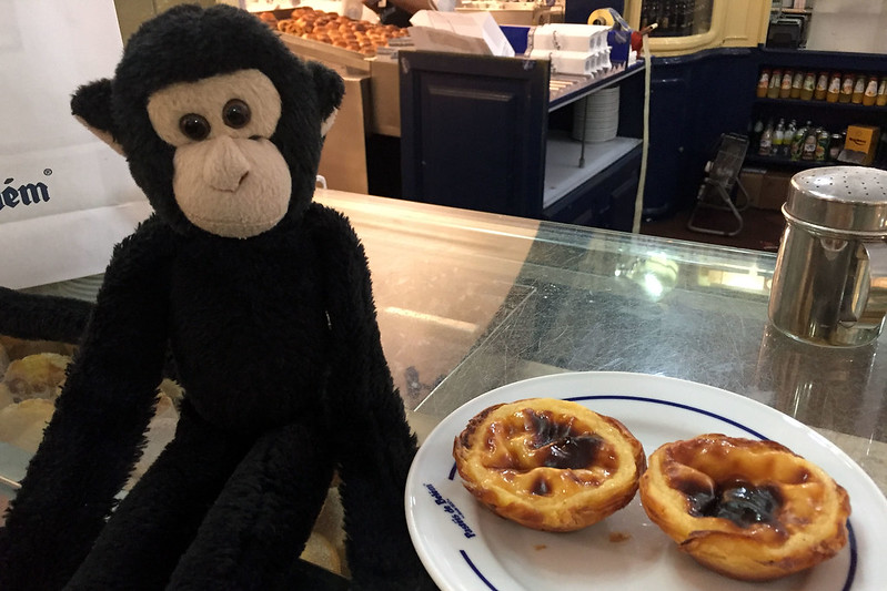 Monkey enjoying pastéis de Belém