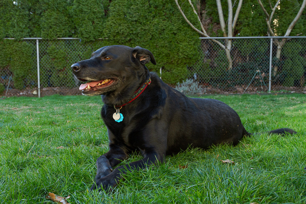 Our dog Ellie relaxing in the backyard in February 2010