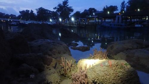 Living rocks opposite Changi Point Ferry Terminal