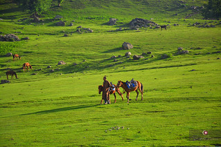 Life around Sonmarg, Jammu & Kashmir
