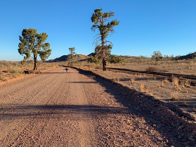 Wilpena Pound,  South Australia,