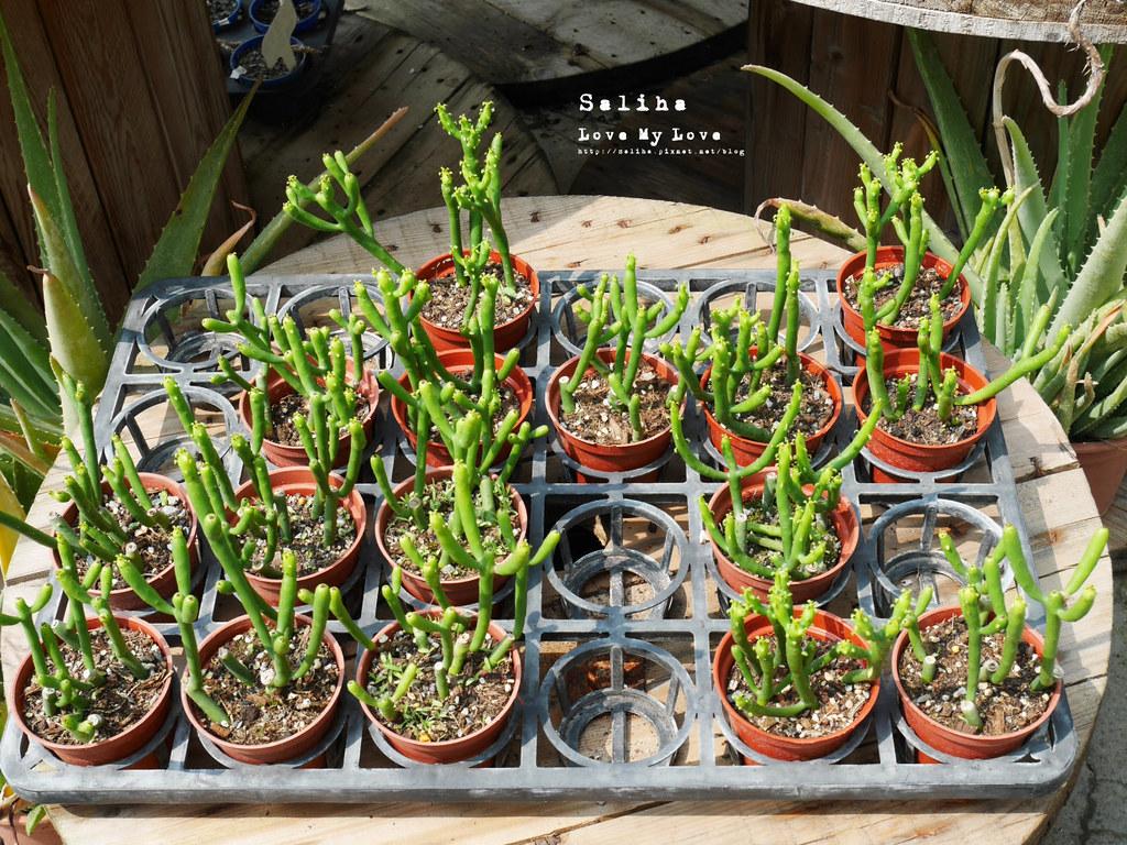 彰化旅遊景點推薦田尾公路花園綠果庭院Green Life多肉植物市場 (3)