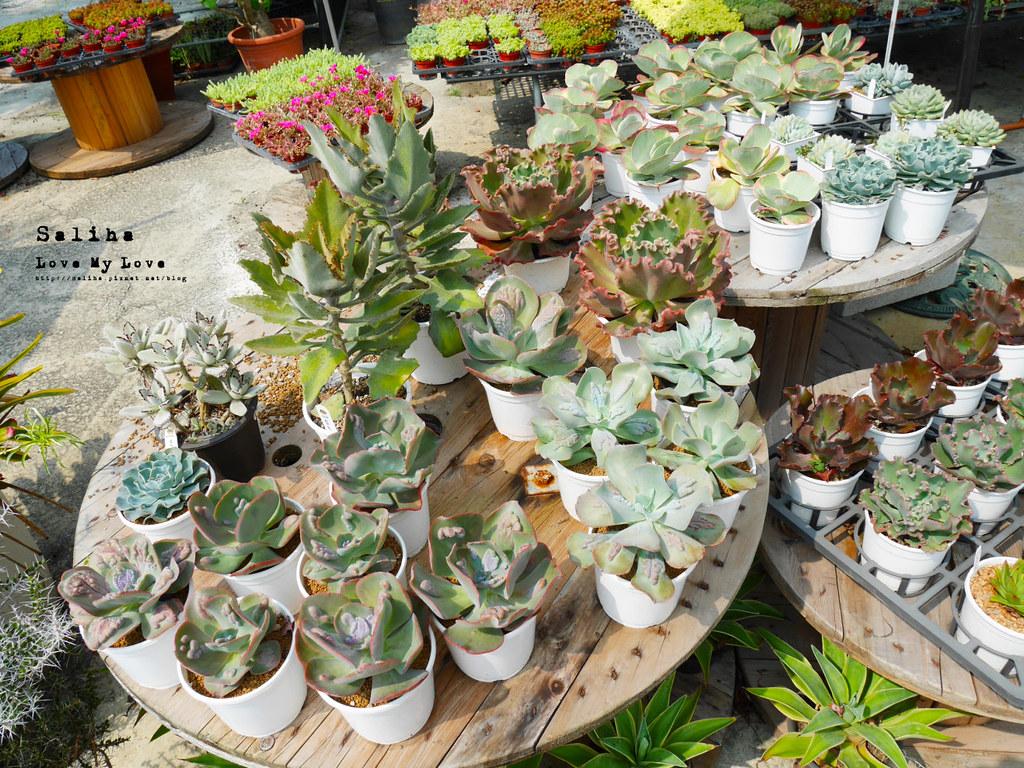 彰化旅遊景點推薦田尾公路花園綠果庭院Green Life多肉植物市場 (1)