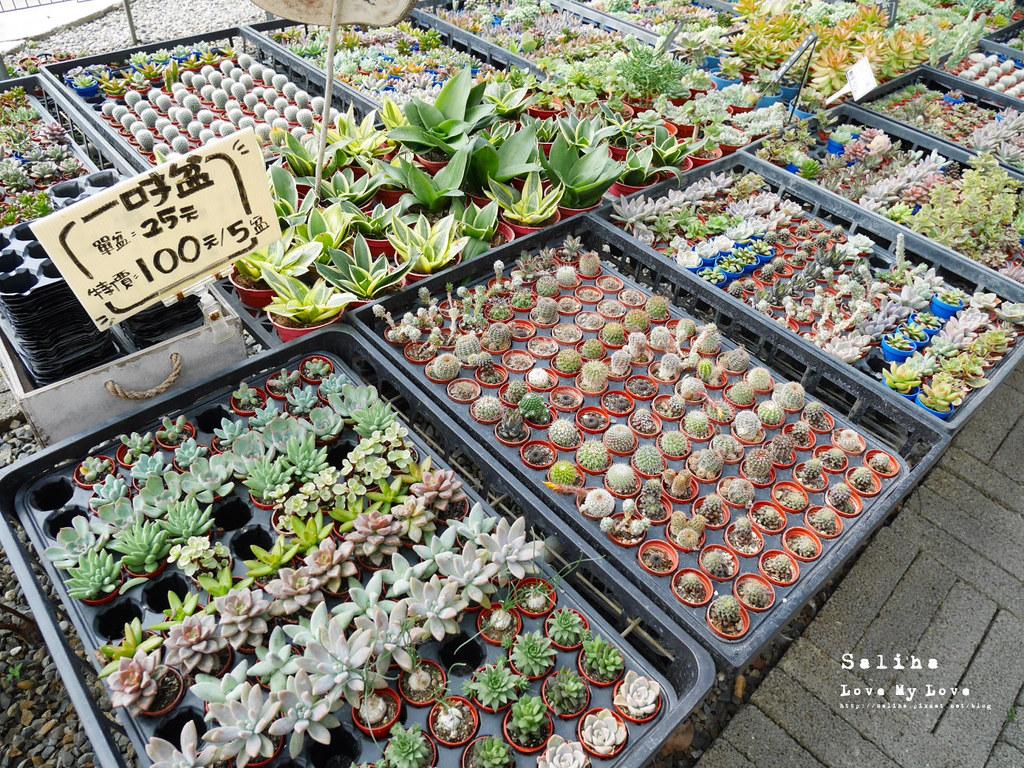彰化旅遊景點推薦田尾公路花園綠果庭院Green Life多肉植物市場 (5)