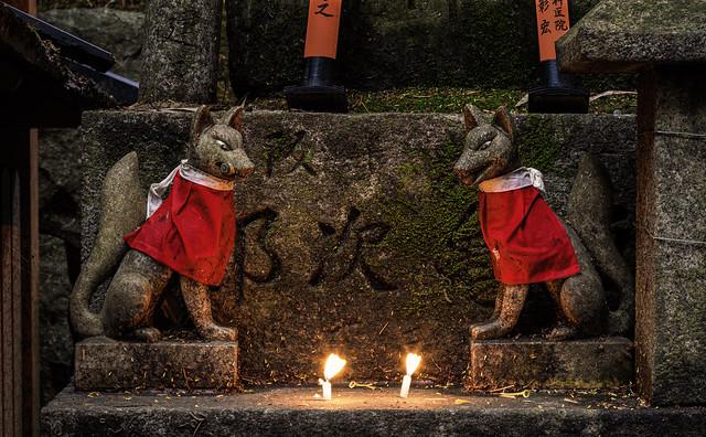 Inari foxes