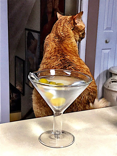 2019 169/365 6/18/2019 TUESDAY - Martini and Cat