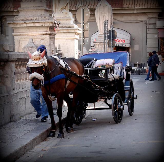 Carrozzella per giro turistico della città!!!