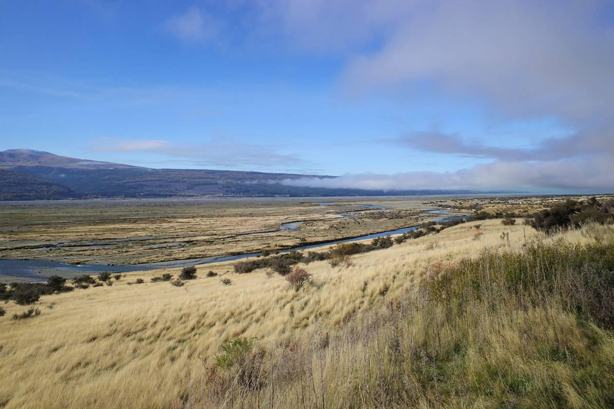 ニュージーランド 草原風景