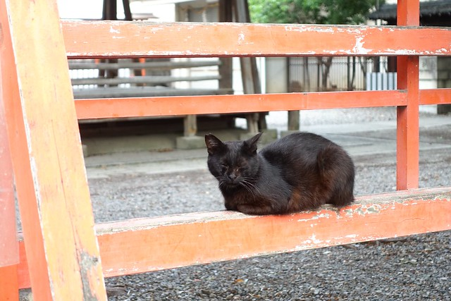 Today's Cat@2019-06-19