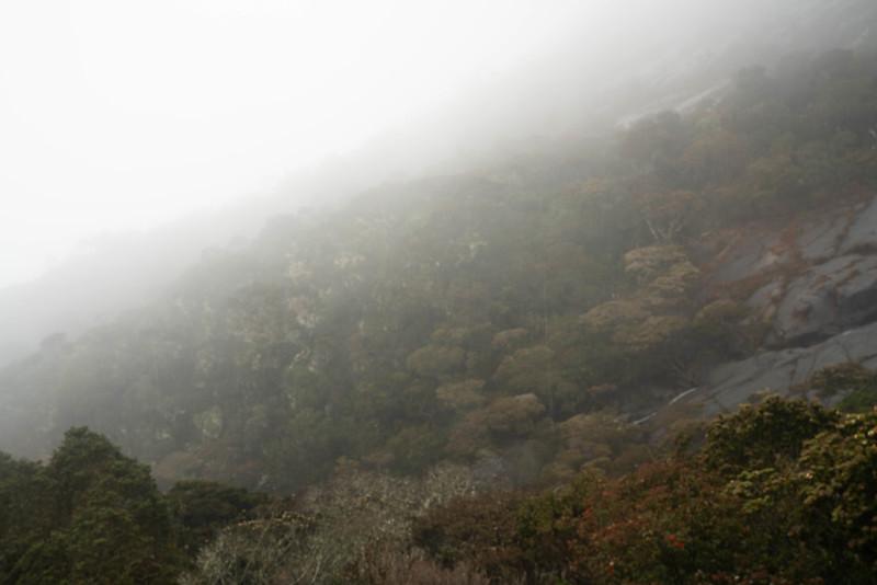 20190504_キナバル山登山(1日目)_0089.jpg