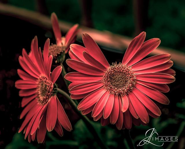 Flower Missing a Leaf