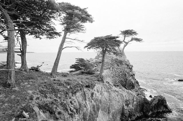 Lone cypress point