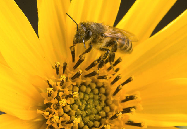Boosting Bee Health…Naturally | USDA