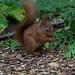 """<p><a href=""""https://www.flickr.com/people/stephen-martin/"""">SteveMartin2011</a> posted a photo:</p>  <p><a href=""""https://www.flickr.com/photos/stephen-martin/48093182591/"""" title=""""_N5U4518.jpg""""><img src=""""https://live.staticflickr.com/65535/48093182591_d5a17bb9ba_m.jpg"""" width=""""160"""" height=""""240"""" alt=""""_N5U4518.jpg"""" /></a></p>"""