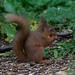 "<p><a href=""https://www.flickr.com/people/stephen-martin/"">SteveMartin2011</a> posted a photo:</p>  <p><a href=""https://www.flickr.com/photos/stephen-martin/48093282692/"" title=""_N5U4505.jpg""><img src=""https://live.staticflickr.com/65535/48093282692_285491582d_m.jpg"" width=""240"" height=""160"" alt=""_N5U4505.jpg"" /></a></p>"