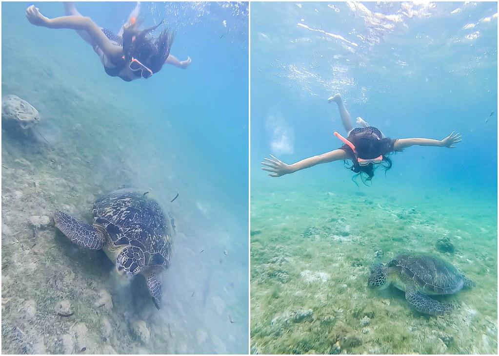 turtle-bay-moalboal-alexisjetsets