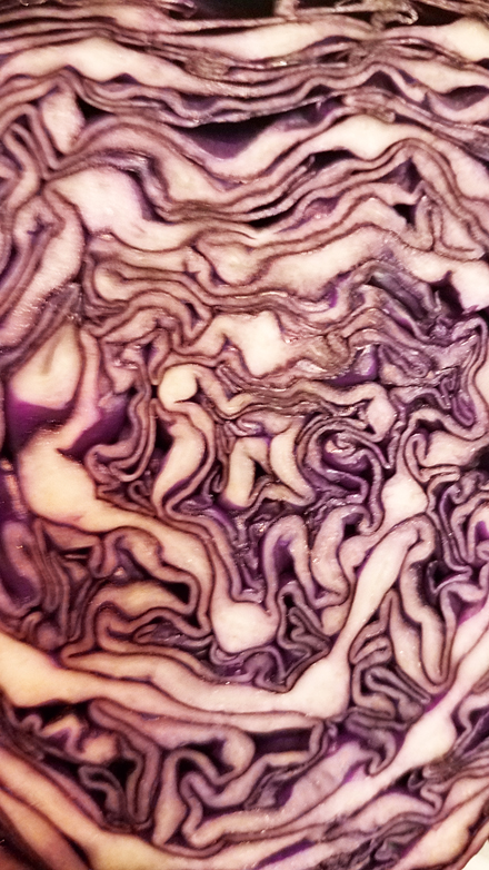 Cabbage Bisection