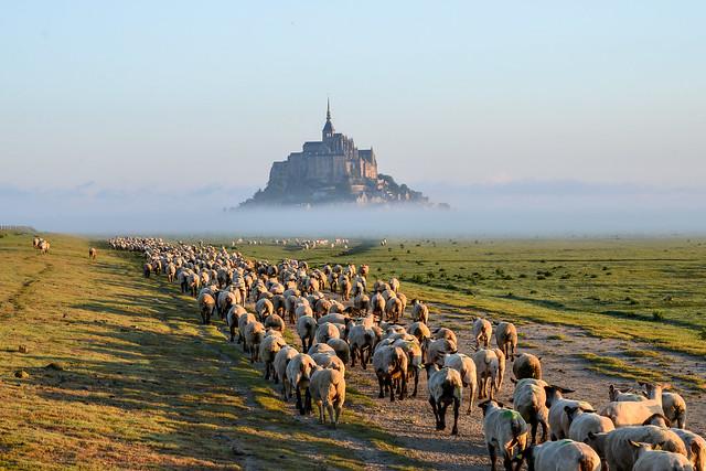 Mont St Michel -5