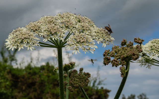 Insects and plants.