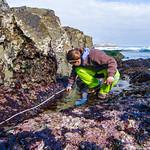 Sea Star Surveys
