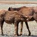 8893 - feral horses
