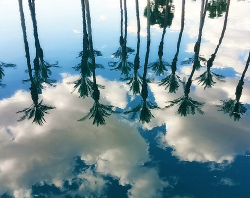 reflections trees clouds sky blue water palm lake green white puffy upsidedown clear looking photography nature moonjazz palmdesert above plants tall straight
