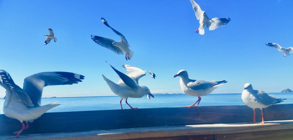 Seagulls fighting over fish & chips.