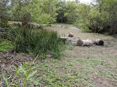 Icky Swampy Marsh