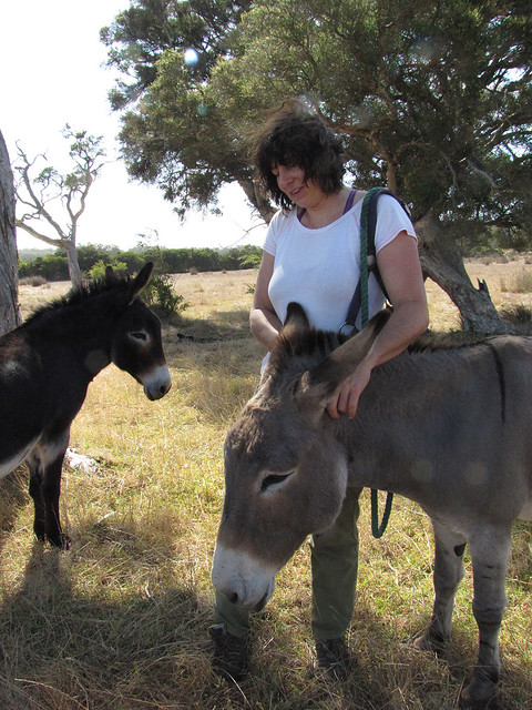 Donkey Ear Scratching – Red Moon Sanctuary, Redmond, Western Australia