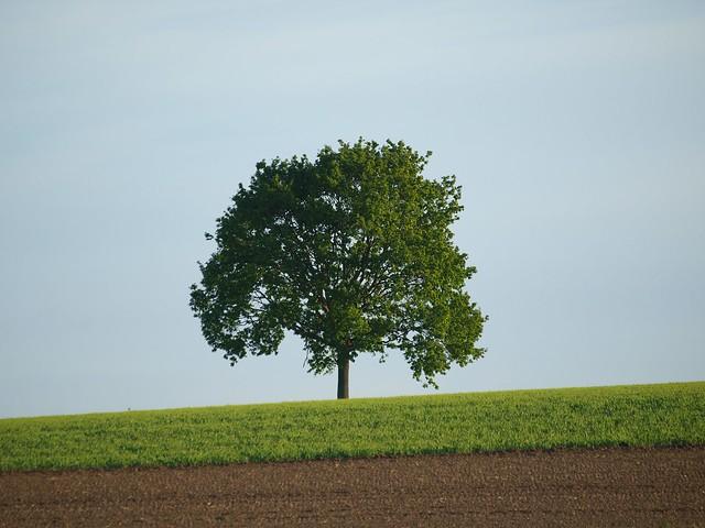 Baum in einem Feld
