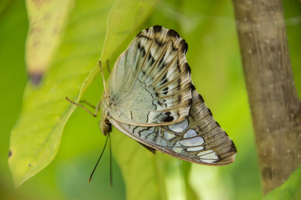 Парк бабочек в Паттайе Butterfly Corner