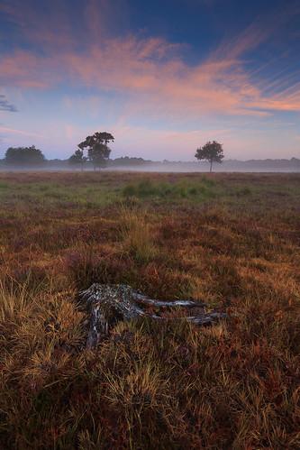 maarsbergen utrecht netherlands dutch nederland summer leersumseveld leersum heath moor sunrise forest nature
